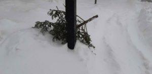 Sapin naturel abandonné après les Fêtes et gisant dans la neige
